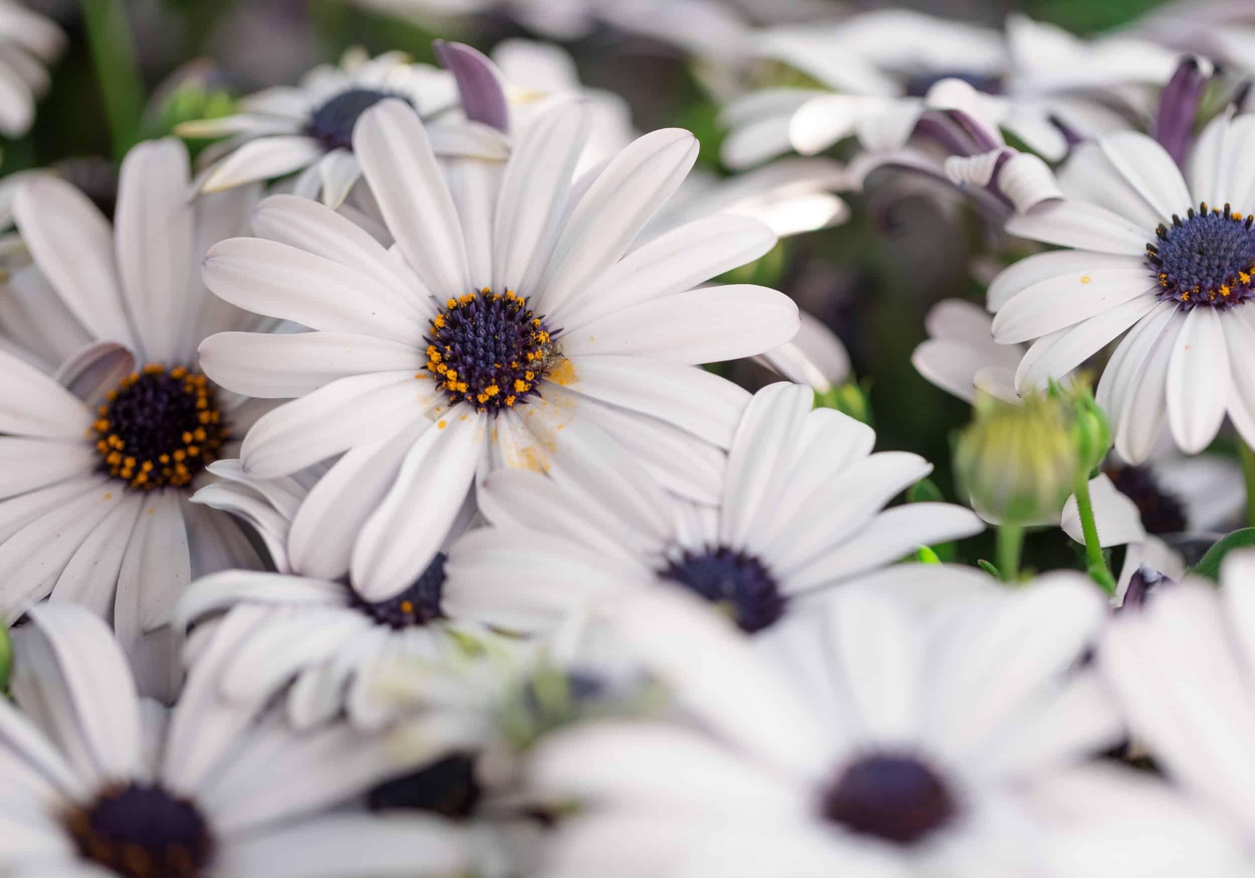 Eine Detailaufnahme von weißen Blüten