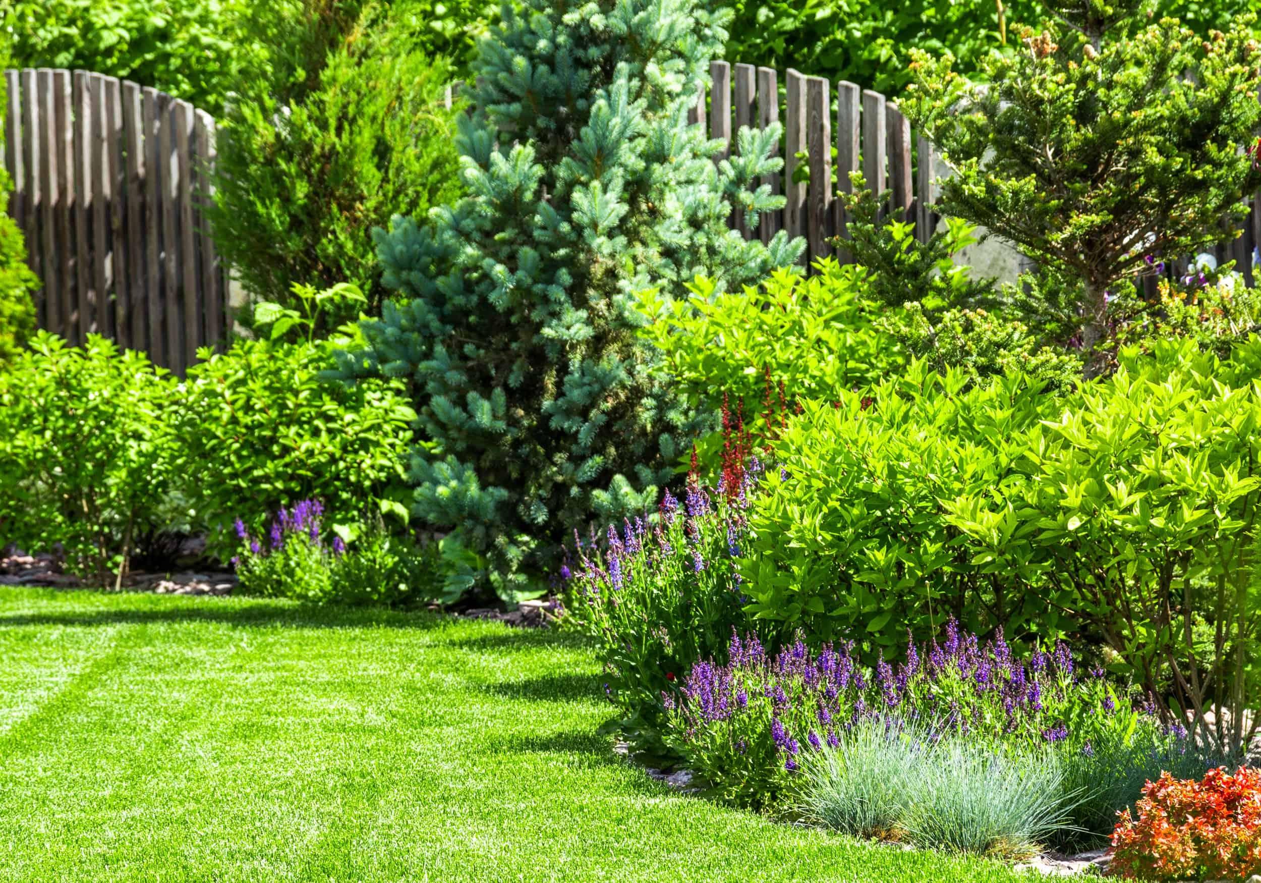 Eine Rasenfläche mit am Rand angelegten Pflanzenbeeten